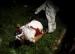 Le dialogue suspendu au Burundi après l'assassinat d'un opposant